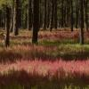 Forest Pinks,  The Animas Valley Photograph