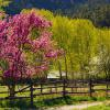 Spring Palette, The Animas Valley photograph